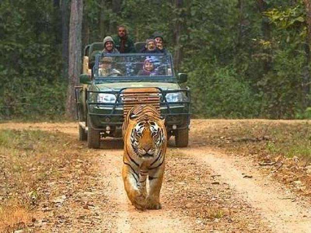 Enchanting Forest Of Madhya Pradesh Tour - 1/1