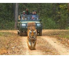 Enchanting Forest Of Madhya Pradesh Tour